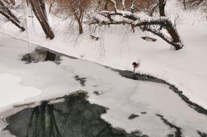 iarna9.jpg