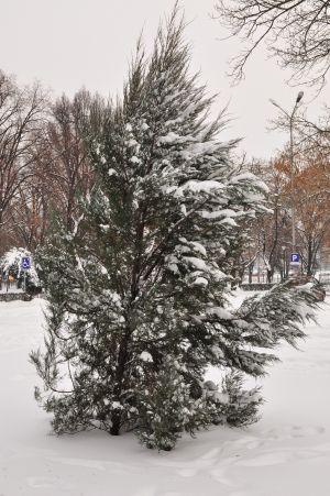 iarna14.jpg